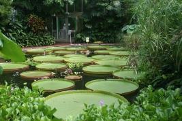 Botanic05
